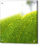 Micro Leaf Acrylic Print