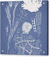 Microdyctyon And Cladophora Acrylic Print