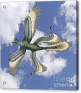 Microraptor Acrylic Print