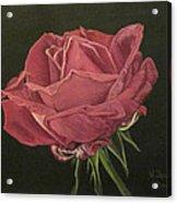 Mid Bloom Acrylic Print