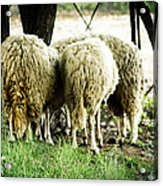 Midday Meeting At The Office  Acrylic Print