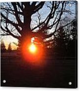 Middle Of The Tree Sunset Acrylic Print