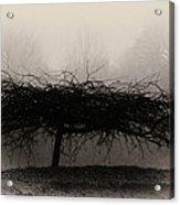Middlethorpe Tree In Fog Sepia - Award Winning Photograph Acrylic Print
