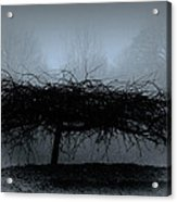 Middlethorpe Tree In Fog Blue Acrylic Print