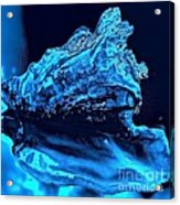 Midnight Blue Sea Shell Acrylic Print