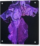 Midnight Iris Acrylic Print