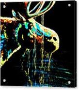 Midnight Moose Drool  Acrylic Print by Teshia Art