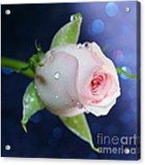 Midnight Rose Acrylic Print