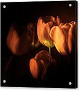 Midnight Tulips Acrylic Print