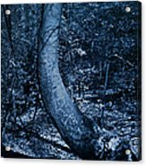 Midnight Woods Acrylic Print