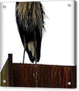 Mighty High Heron  Acrylic Print