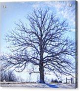 Mighty Oak In Winter Acrylic Print