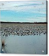 Migrating Geese Acrylic Print