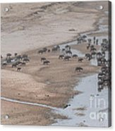 Migration Acrylic Print