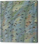 Migratory Geese Moon April Acrylic Print by Ethel Vrana