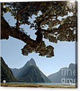 Milford Sound Acrylic Print