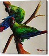 Military Macaws Acrylic Print