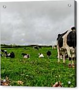 Milk Nature Nose Acrylic Print