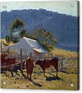 Milking Time. Araluen Valley Acrylic Print