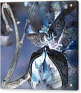 Milkweed In Blue Acrylic Print
