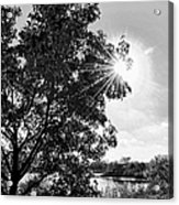 Mill Creek Marsh Afternoon Sun Acrylic Print