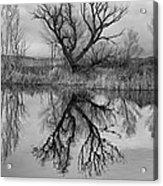 Mill Pond Tree Acrylic Print