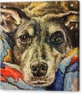 Milo The Lurcher Acrylic Print