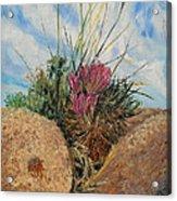 Mini Cactus Garden In Rock Acrylic Print