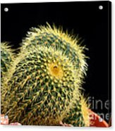 Mini Cactus In A Pot Acrylic Print