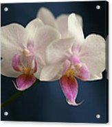 Mini Orchids 2 Acrylic Print