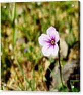 Mini Wild Flower Acrylic Print