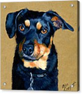 Miniature Pinscher Dog Painting Acrylic Print