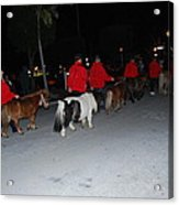 Miniature Ponys Acrylic Print