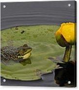 Mink Frog On Lilypad  Acrylic Print