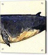 Minke Whale Acrylic Print