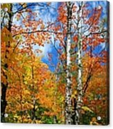 Minnesota Autumn Foliage Acrylic Print