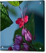 Miracle Vine Acrylic Print