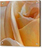 Mirage Rose Acrylic Print