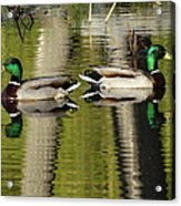 Mirror Images  Acrylic Print