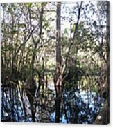 Mirroring The Swamp Acrylic Print