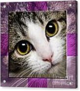 Miss Tilly The Gift 2 Acrylic Print