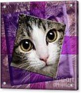 Miss Tilly The Gift 4 Acrylic Print