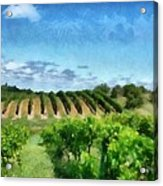 Mission Peninsula Vineyard Ll Acrylic Print by Michelle Calkins