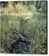Mississippi River Headwaters Acrylic Print