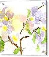 Missouri Dogwood In Watercolor Acrylic Print