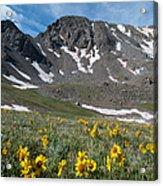 Missouri Mountain And Wildflower Landscape Acrylic Print