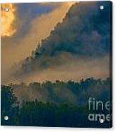 Mist amongst trees Acrylic Print
