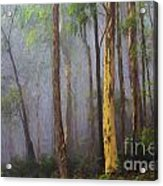 Mist in forest Acrylic Print