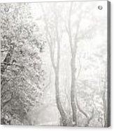 Mist In Madeira Acrylic Print