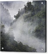 Mist in trees at Franz Josef glacier Acrylic Print